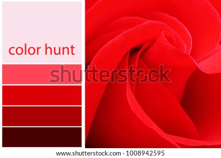 Free Photos Red Color Selection Complimentary Chart Palette Avopix