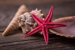 Close-up of red starfish seashell on old wooden board.