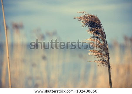 Close up of reed against water and sky