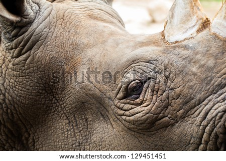 Close up of Rhino head