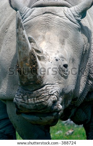 close up of rhinoceros