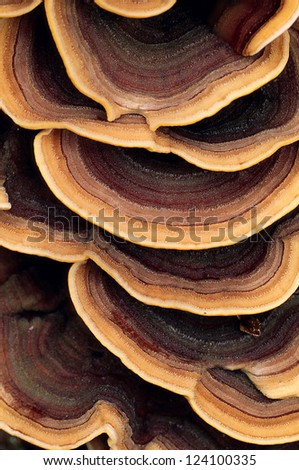 Close up of ringed polypore fungus growing on the side of a tree #124100335