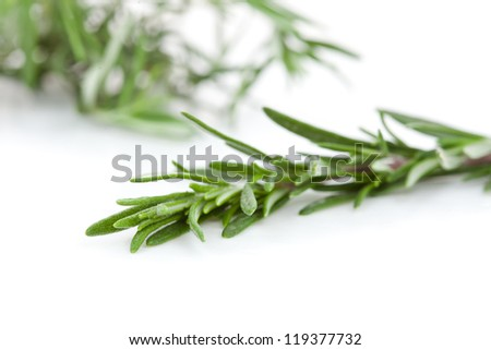 Close up of rosemary branch against a white background