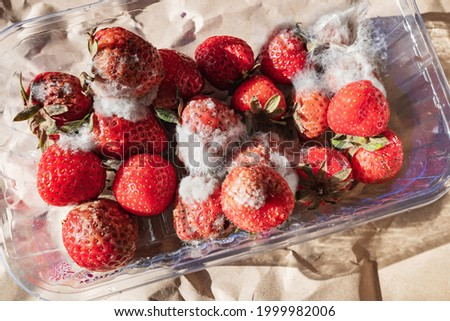 Close-up of rotting strawberries with fungal mold in plastic box container. Spoiled food due to improper, long-term storage, aversion to spoiled fruit.  Stok fotoğraf ©