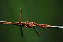 Close up of rusty barbwire or Barbed wire