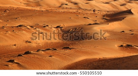 Close up of sand dunes near sunset. A solitary camel can be seen in the background. Rub al Khali or Empty Quarter, Oman #550105510