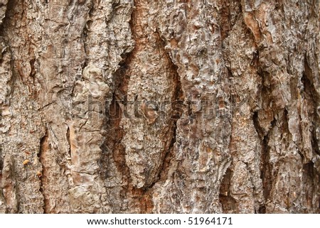 Close up of Scot's Pine Bark