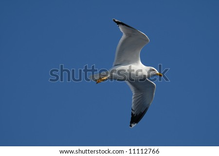 Close-up of seagull flying over clear blue sky - stock photo