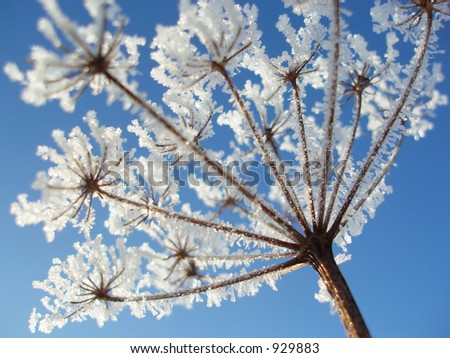 Close-up of seed with ice crystals against blue winter sky