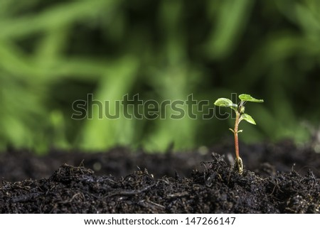 Close up of seedling sprouting from the ground with green bokeh background