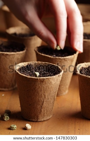 Close-up of seeds, planting pots and hand with seed