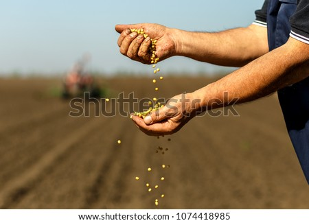 Close up of senior farmer with soybean seed in his hands. Stock photo ©