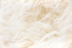 close up of sheepskin texture background