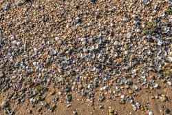 Close-up of shells, gravel and twigs washed up on a sandy beach of the Dutch river Waal near the village of Herwijnen, municipality of West Betuwe, province of Gelderland.