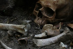 Close up of skulls and skeletons bones were unearthed from the graves in the horrible cemetery Still life and art image. In dim light.