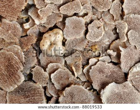 close-up of sliced white truffles (tuber magnatum)