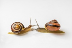 Close-up of slimy snails isolated on white background