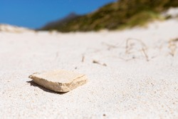 close-up of small sandstone rock in Coastal sand dune landscape of Fish Hoek, Cape Town