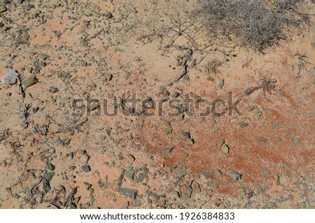 Close-up of small stones, branches and thorns on sandy soil of Chrissi island (Greece). Natural background texture.