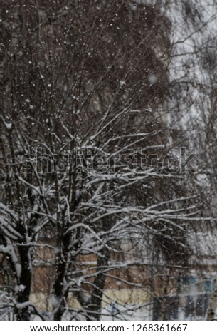 Close-up of snow-covered trees and branches on the background of a blizzard and blizzard with a soft rear angle #1268361667
