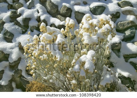 Close up of snow on plants and rocks in Pine Mountain Club, Southern California