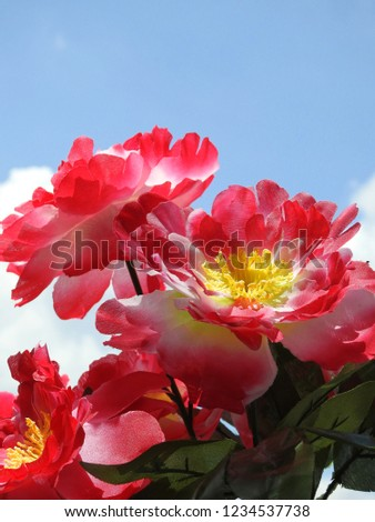 Close-up of some big red artificial flowers with yellow carpel. In the background, blue sky with a few clouds. The flowers are fake, made of fabric. Sunny day.