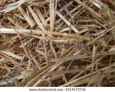 Close up of some hay