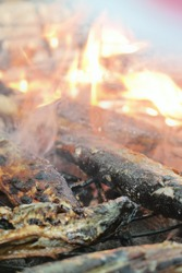 Close-up of some mackerel pike, Cololabis saira being grilling in smoke with charcoal on the gridiron in the soft focus in the background.