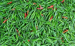 Close-up of some red and green chillies mixed