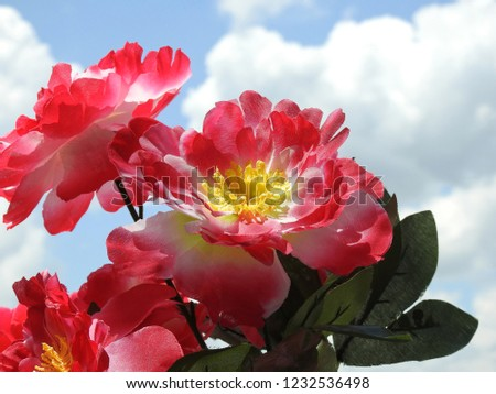 Close-up of some red artificial flowers with yellow carpel. In the background, clear blue sky with clouds. The flowers are fake, made of fabric. Sunny day.
