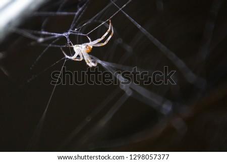 Close up of spider arachnid on spider web cob web at night #1298057377