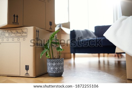 Close up of stacked removal boxes and house plants in lounge ready for moving in or moving out of home