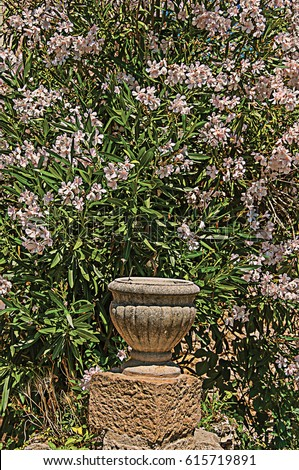 Close-up of stones and vase with shrubs and flowers, at the gorgeous medieval hamlet of Les Arcs-sur-Argens. Located in the Provence region, Var department, southeastern France. Retouched photo Photo stock ©