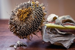close-up of sunflower flower with seeds