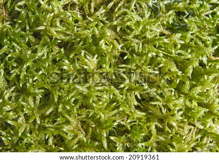 Close-up of sunlighted mossy ground for texture - stock photo