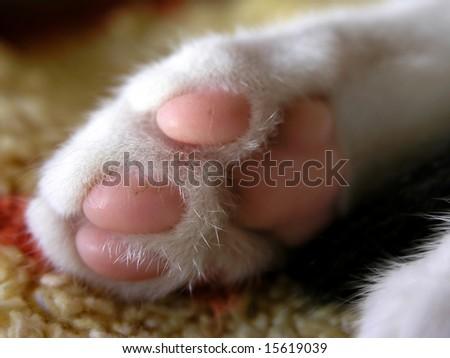 close up of sweet little pink kitten paw