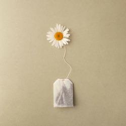 Close up of tea time. Dry camomile tea in the tea bag, minimal concept