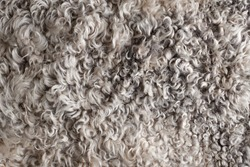 Close-up of texture of warm fur of sheep wool skin in a cozy home for decoration and interior design. Textile Abstract Background.
