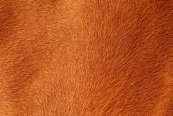 close up of textured pelt from a brown horse
