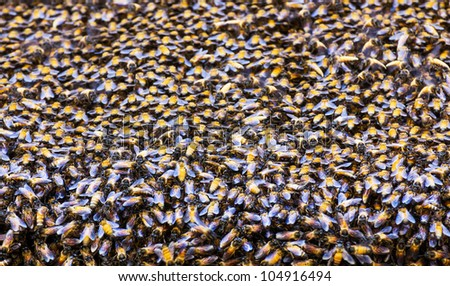 Close up of the bees on beehive