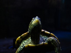 Close up of the face of a turtle through the glass of an aquarium