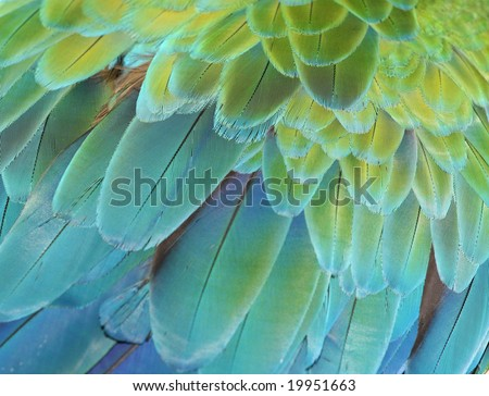Close-up of the feathers of a green or blue and gold macaw parrot