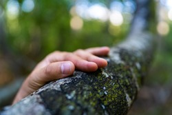 Close-up of the hand of a Caucasian man holding a branch of a tree in a green virgin forest. Climate change, environmental protection, human impact on nature.