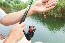 Close-up of the hands of a Caucasian fisherman, with a fishing rod, throwing a hook with white and red larvae into the water. Bait for carp, bream, perch, crucian carp, roach, silver bream, bleak