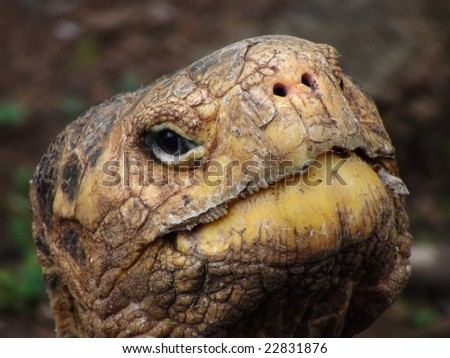 Close Up of the Head of a Giant Tortoise, Galapagos Islands