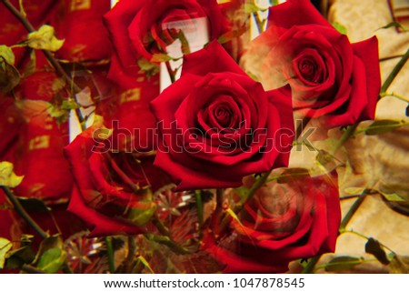 """Close-up of the inflorescences of the red rose """"Niccolo Paganini"""" with twisted petals in five sectional reflections standing in a crystal vase                                #1047878545"""