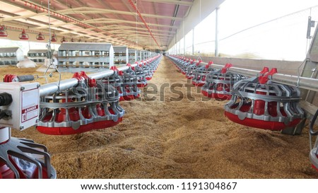 Close up of the inside of a modern poultry house