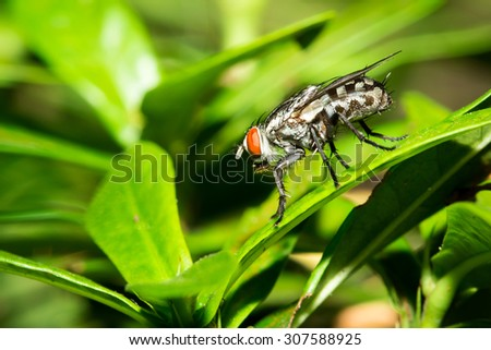 Close up of the little fly on the green leaf. #307588925