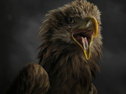 Close-up of the muzzle of a white tailed eagle