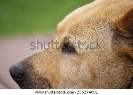 Close Up of The Profile of The Face of A Lonely Dog. The Eye Looks to The Far Place Sadly.